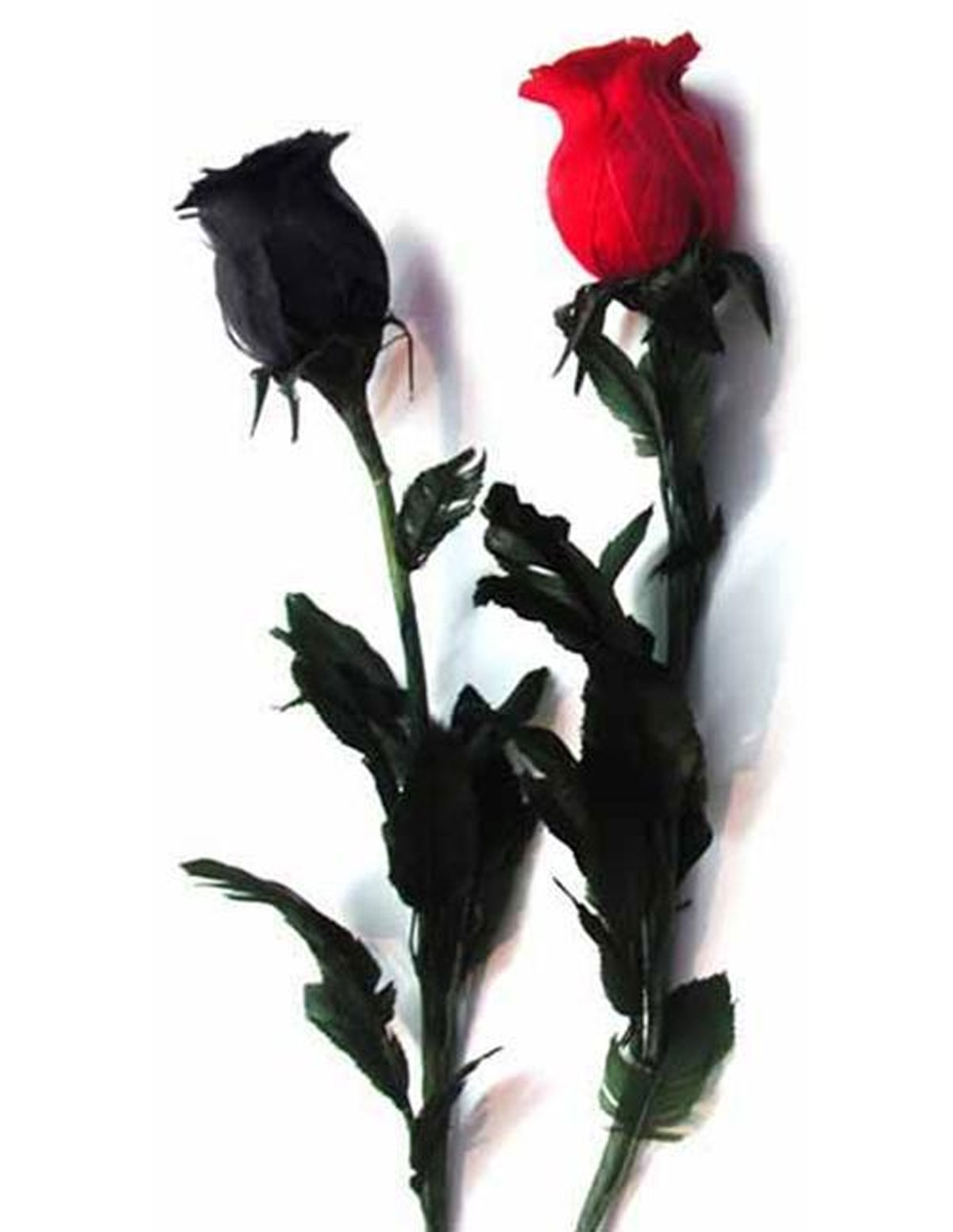 Red Feather Rose
